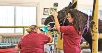 Ali Harman é assistente de eqüinos no Taylor Equine Hospital, em Turlock, Califórnia