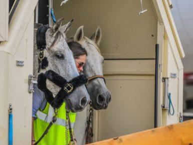 Todos a bordo! Centenas de cavalos decolam para os Jogos Equestres Mundiais
