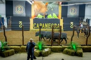 Leilão Capanegra 2018 (Foto Gustavo Rafael)