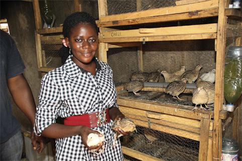 élevage cailles Mali (Image Internet)