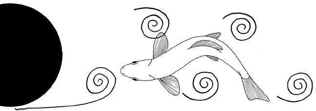 esquema de funil formado pelo movimento dos peixes