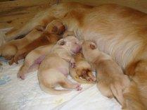 14 cucciolotti