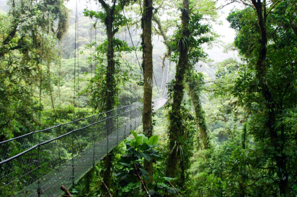 cloud forest in Monte Verde Costa Rica
