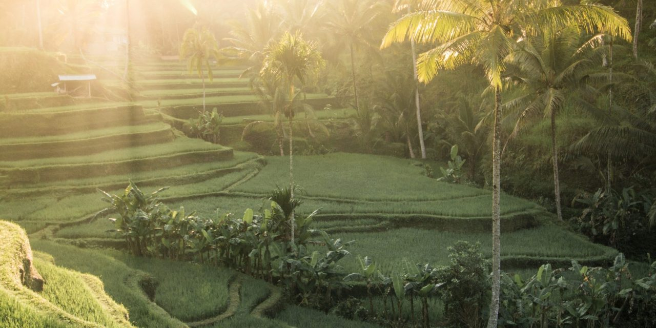 Top things to do in Bali on your honeymoon