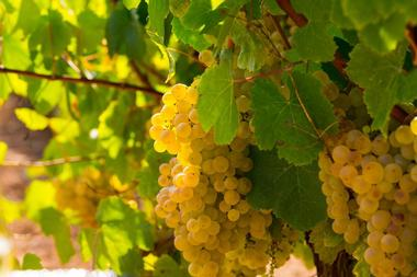 Karmere Vineyard and Winery