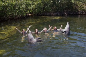 Things-To-Do-In-Florida-Keys-Dolphin-Cove
