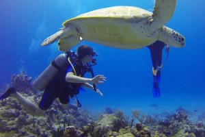 Things-To-Do-In-Riviera-Maya-swimming-with-turtle-at-Akumal-beach