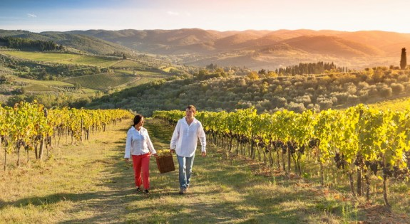 Wine Country Of California Tours
