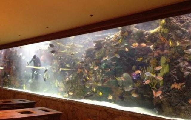 The Mirage - Aquarium Las Vegas