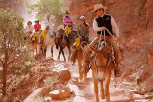 donkey ride at grand canyon