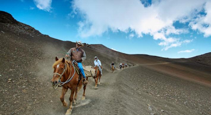 Horses at Haleakala in Maui