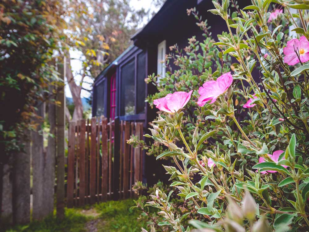 Berry Vine Cottage Point Reyes