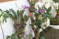 Carasuchi Villa Holiday Rental Tagaytay Philippines Orchid Garden