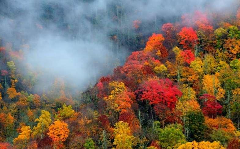 Smoky Mountain Foliage Forecast Information For 2021