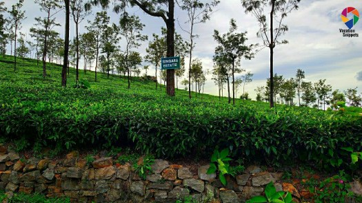 Singara estate, Coonoor