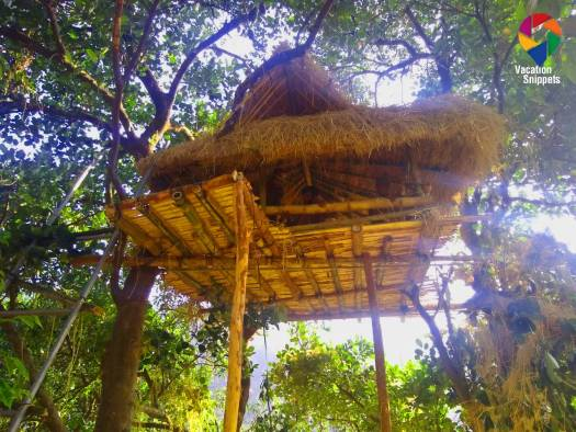 Treehouse pic