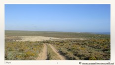 South Africa West Coast - Drive from Houthoop through the Namaqua and Skilpad National Park towards Cape Town.060