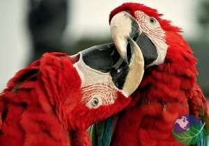how to decide between costa rica honeymoon packages love macaws