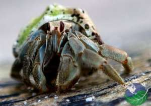 where to go in costa rica for nature hermit crab