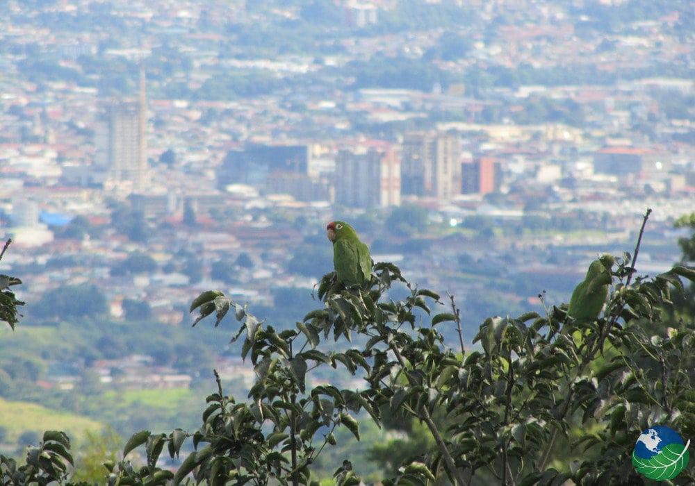 Escazu Costa Rica parrots