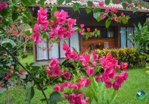 Kenaki Lodge Flowers