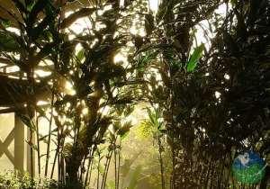 Selva Bananito Lodge Nature
