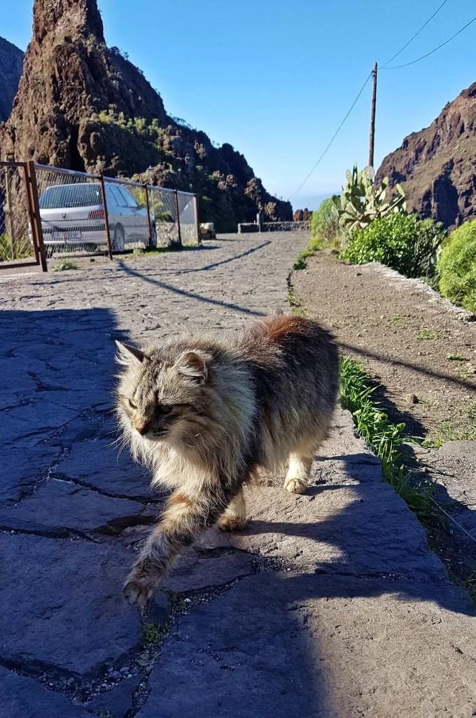 cat, masca village, tenerife