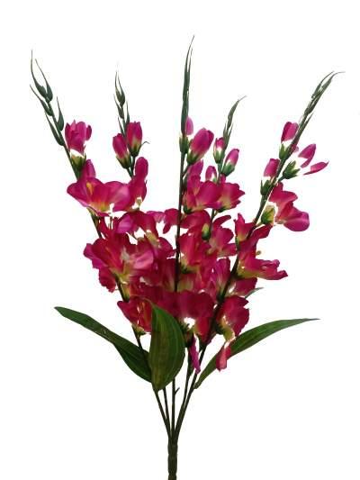 majenta flower kali