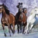 lovak vágtáznak - illusztráció
