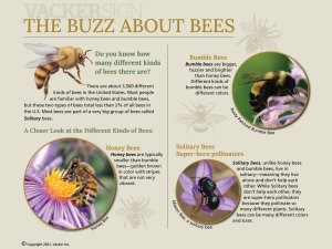 G21-6 Standard Buzz About Bees interpretive sign