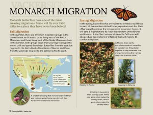 G21-5 Standard monarch migration interpretive sign