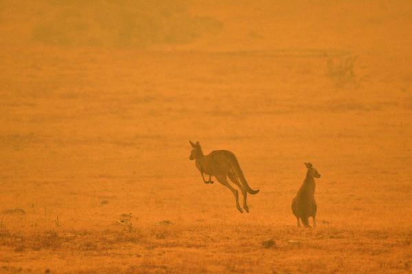 Incendios forestales en Australia están fuera de control