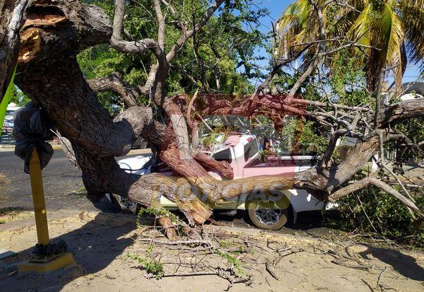 Cae árbol de guamúchil sobre dos vehículos, hay un lesionado en VdeA