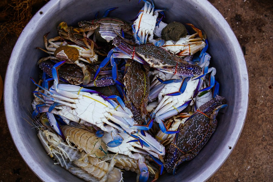 "The blue crabs or ""sand crabs"" made a strong impression on me"