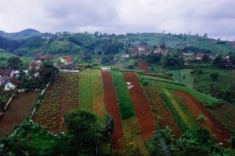 Vagabondays-Java-Indonesia-11