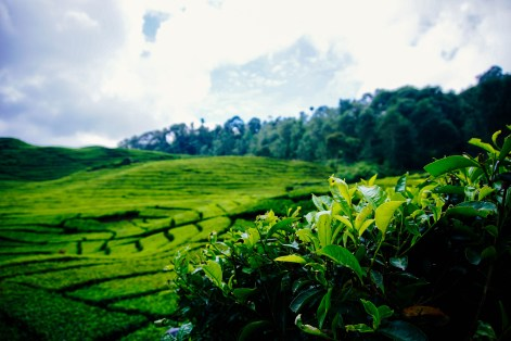 Vagabondays-Java-Indonesia-28