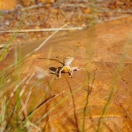vagabondays-australia-gibb-river-road-67