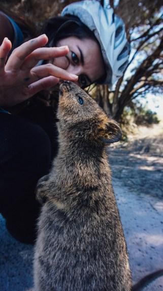 vagabondays-rottnest-australia-25