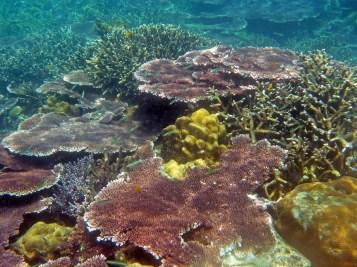 Coral Island Tioman Malaysia 11