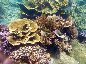 Coral Island Tioman Malaysia 13