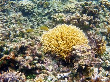 Snorkeling Siquijor Philippines