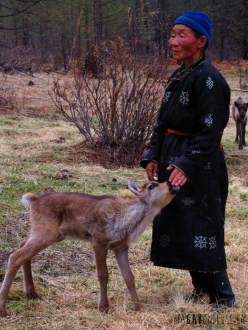 Le vieille dame et le bébé renne