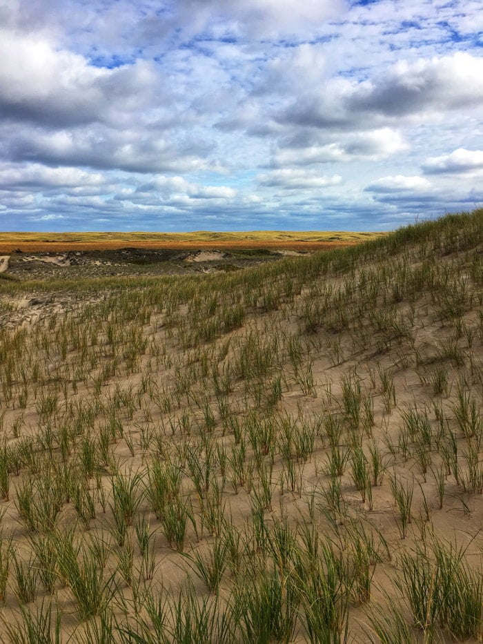 iles-de-la-madeleine foin de dunes