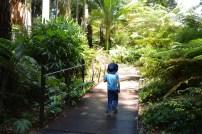 En promenad i regnskogen i Royal Botanical Garden, Melbourne