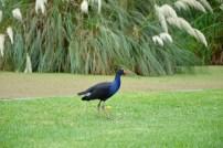 Royal Botanical Garden har ett rikt djurliv