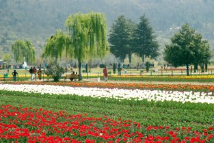 Tulip garden in Srinagar has many other beautful gardens to its company near by