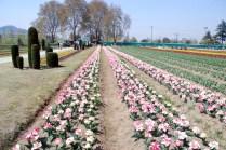 Tulip Garden is adjacent to Botonical garden.