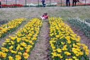 Tulip Garden inspires a many photographers