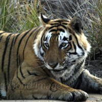Best places to go in 2014 - Ranthambore National Park among the list