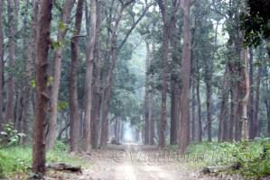 Dense forest of Dudhwa make it tough to spot wildlife